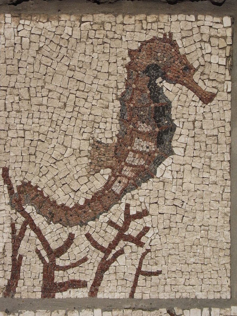 The ancients believed seahorses carried the souls of dead sailors to the underworld #FolkloreThursday https://t.co/HUvPMtQnvo