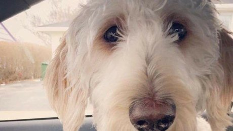 Search underway in Hamilton for dog put on wrong WestJet flight https:...