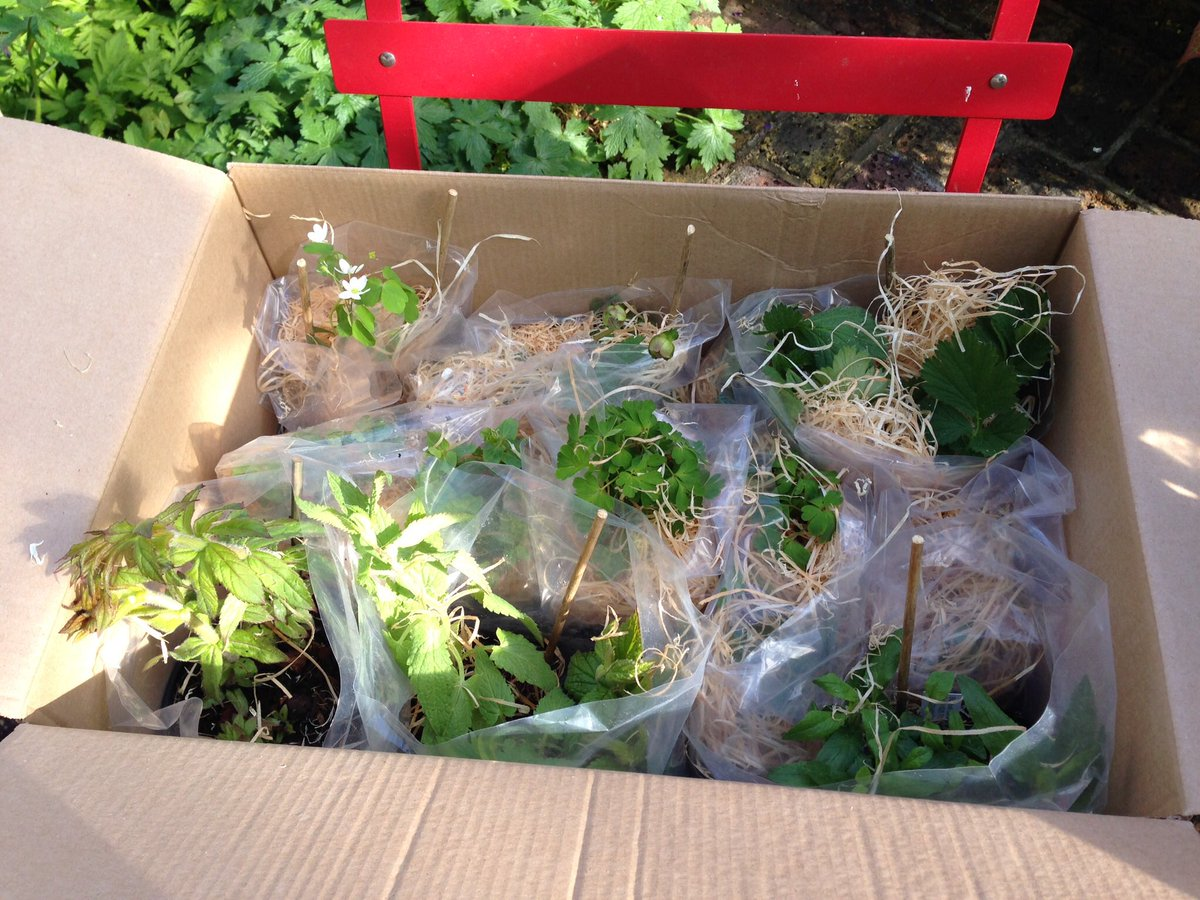 Juliebquinn On Twitter Received Lovely Mail Order Plants Today