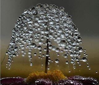#BellesChoses Morning dew <br>http://pic.twitter.com/sdBzUI0gQI