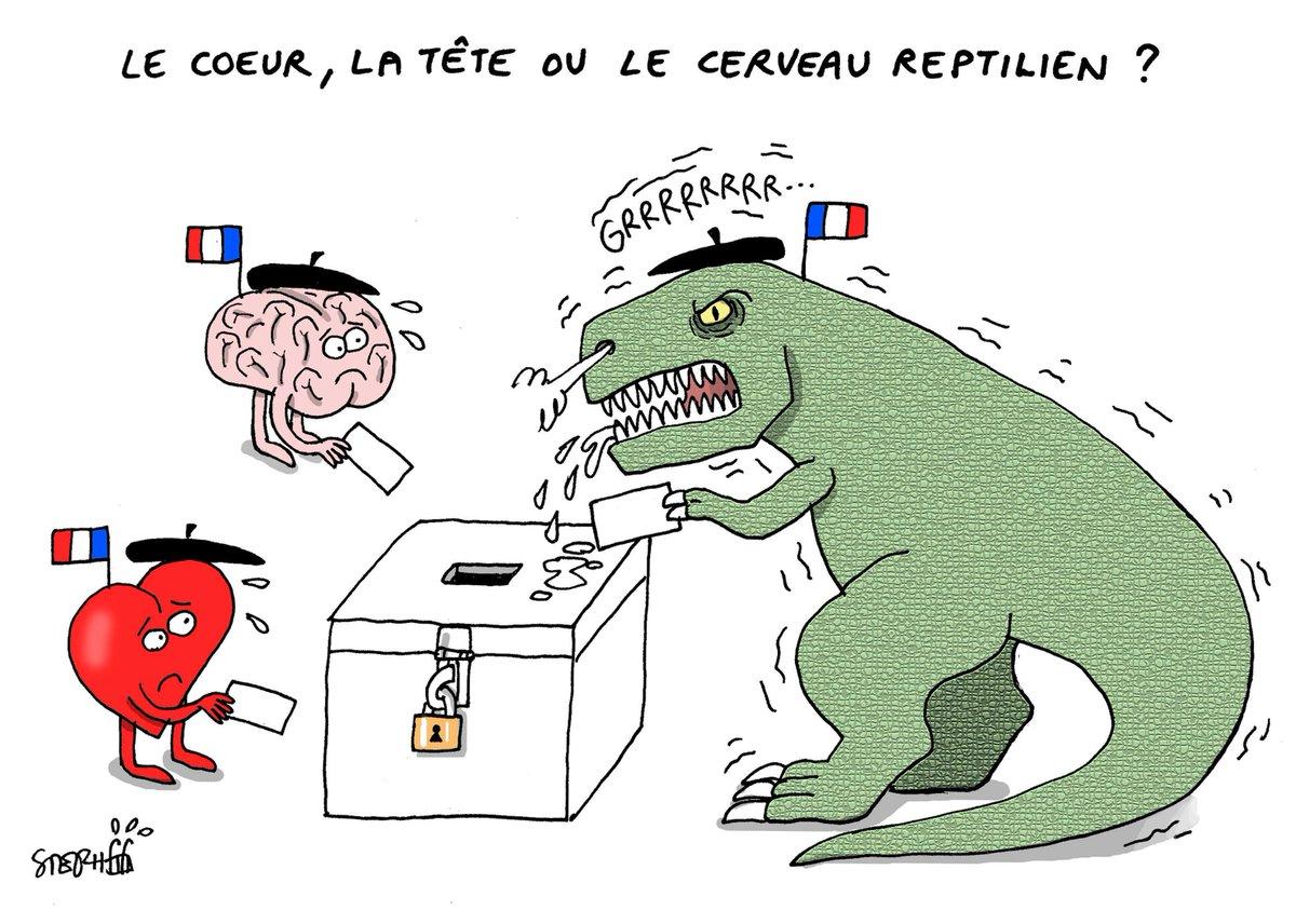 """Résultat de recherche d'images pour """"cerveau reptilien"""""""