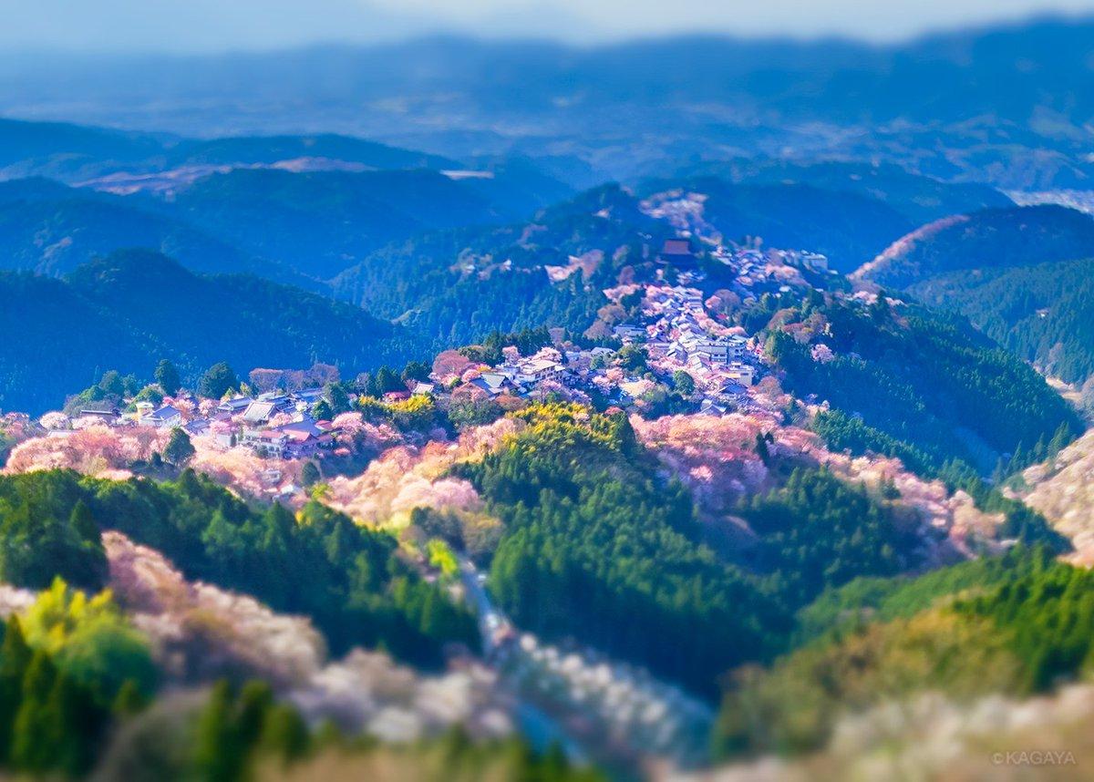 千本桜を眺めた日 1、うららかな午後 2、たそがれの残照 3、月夜に浮かぶ 先週、奈良県吉野山にて撮影。1と2はティルトシフトレンズ使用。