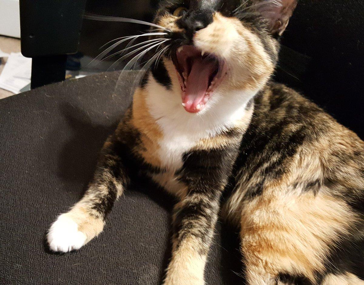 #Roar if you love #Fridays! #friyay #CatsOfTwitter #AdoptDontShop #weekend #oneeyedcat #cute<br>http://pic.twitter.com/h1g19QAFnE