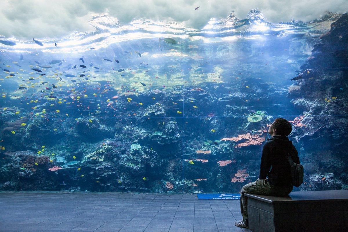 'The world's finest wilderness lies beneath the waves.' - Wyland #Frid...