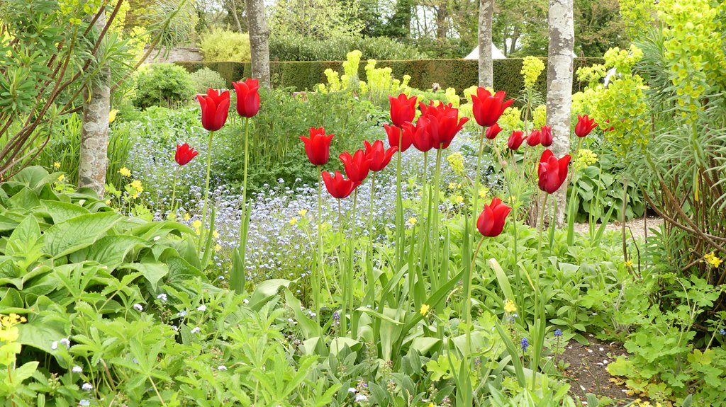 RT @PhotoForager #Project365; Day 37. Tulips in the walled garden @LoseleyPark #spring #gardenshow. Stunning planting and great plant stalls. #Godalming