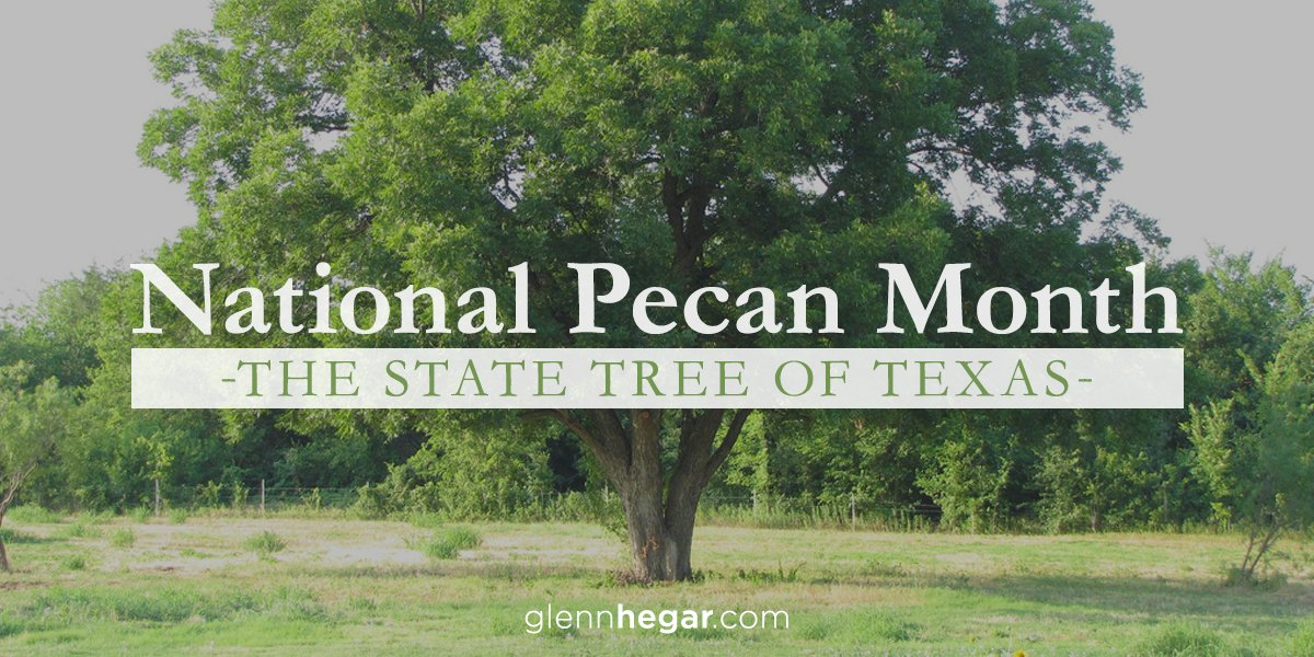 glenn hegar on twitter the pecan tree was established as the