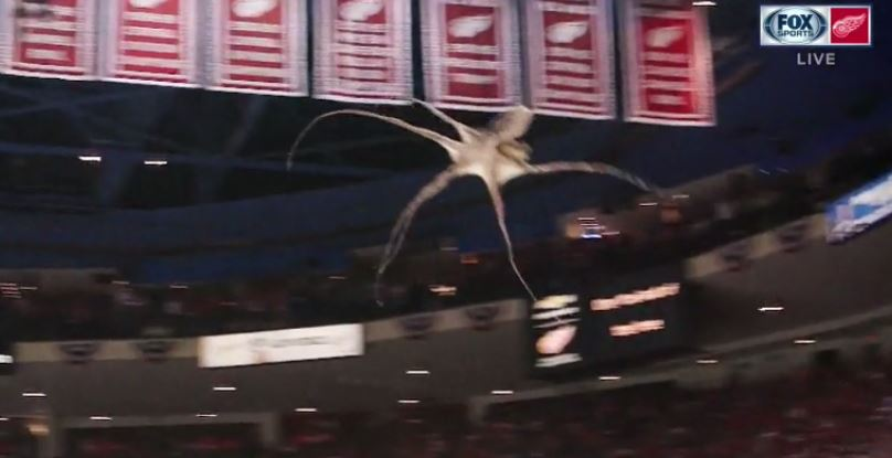 Official: 31 Octopi thrown on ice from the stands at The Joe tonight. https://t.co/C7yHpZGXbe
