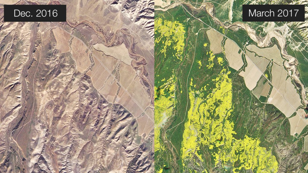 Here's What California's Wildflower 'Super Bloom' Looks Like From Space https://t.co/xlIaJqFx0F https://t.co/Qf26rtDsBf
