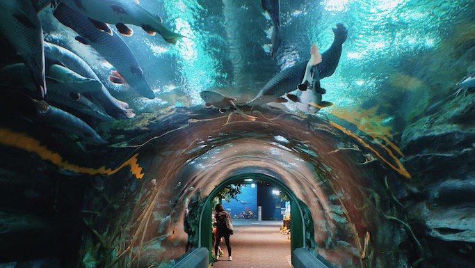 Lotte Aquarium + Lotte Adventure + Lotte Mall 👉🏽 https://t.co/iHGPVtyZkl ❤️ #Trazy #TrazyKorea #TravelCrazyKorea https://t.co/2X8g8KUBWj