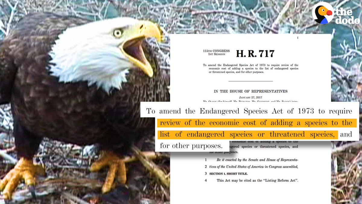 pros and cons of the endangered species act Endangered species protections at center of drought debate lawmakers in hard-hit western states are pushing for suspensions to the endangered species act to free up stored water.