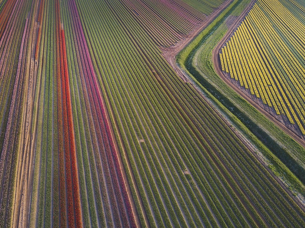 .@iamsimonbyrne takes flight over Norfolk's tulip fields for his #WexMondays entry https://t.co/z3DTHWt7l9