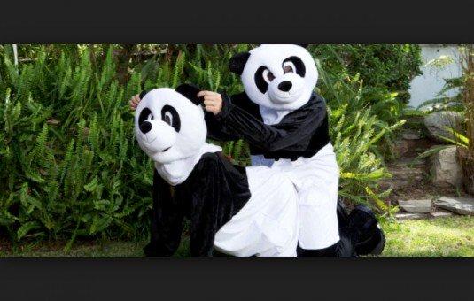 Panda porno