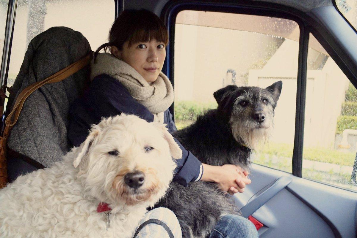 今日は雨の中ドライブしてお買い物だったよ。ワン達は走り回れなくて浮かない顔(笑) オーガニックキヌアをゲットだぜ。 早速煮てる丸。 #いぬとわたし #元保護犬 #元保健所犬pic.twitter.com/04kUatZWVL