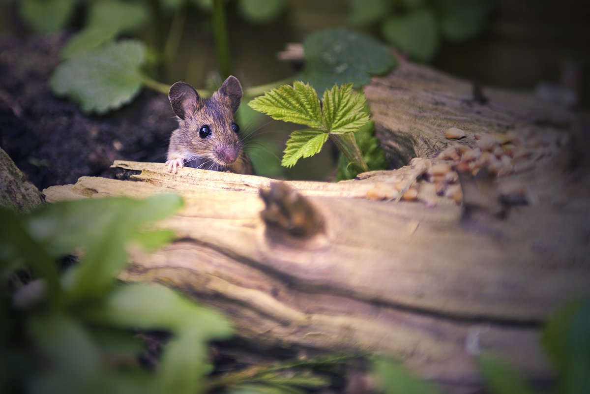 In third place this week, it's @martynhphoto and his little garden visitor! Well done #WexMondays https://t.co/mNsf3nxONa