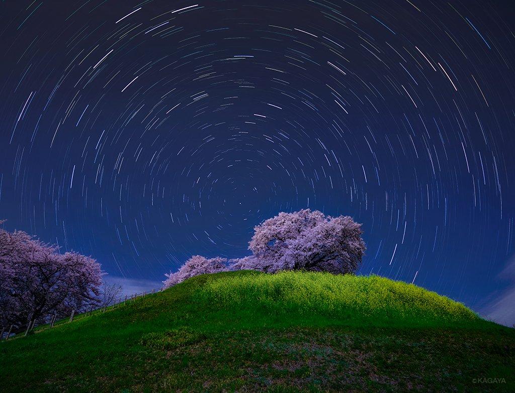 古墳の頂に咲き誇る満開の桜。明るい月光に照らされ、菜の花とともに夜空に浮かび上がっていました。北の空の星々が北極星を中心に軌跡を描いています。(昨日、埼玉県にて撮影) pic.twitter.com/eXSJrBx0QJ