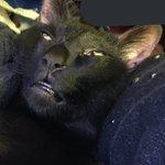 一体なにがあったんだ?w黒猫の表情がえげつなすぎるw