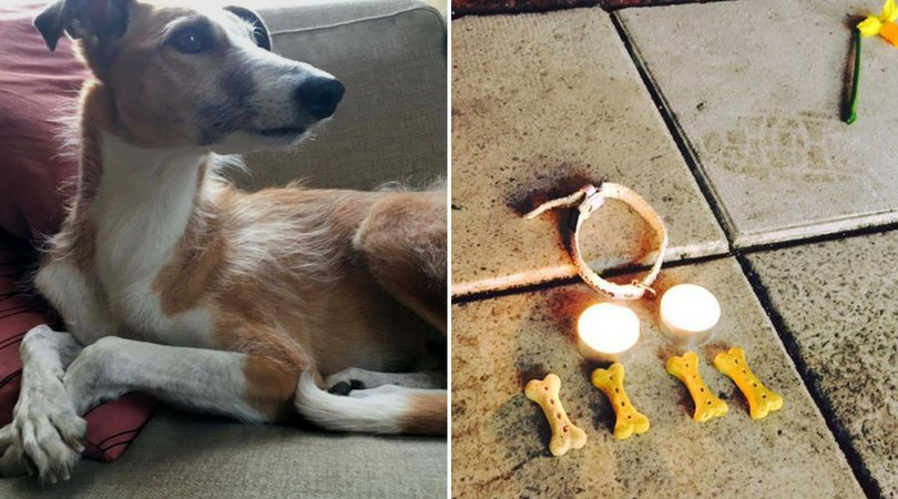 What People Did For A Dog Killed During Swedish Terror Attack Is So