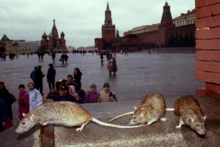Порошенко обсудил с главами МИД Чехии, Словакии и Венгрии ситуацию на Донбассе и санкции против России - Цензор.НЕТ 932