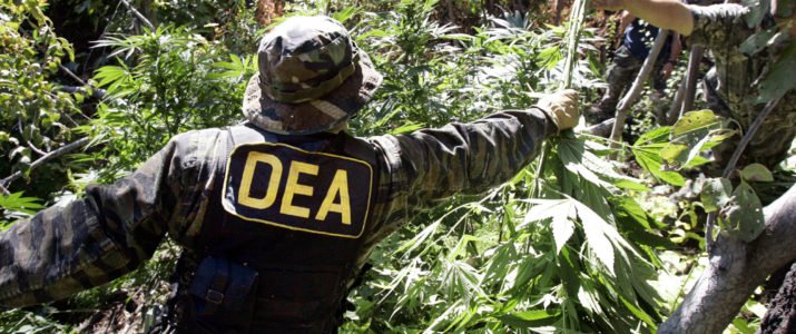Why Is the DEA Messing with the American Hemp Market? – High Times