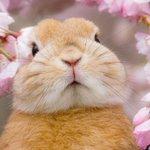 可愛らしさ満開wぬいぐるみのようなウサギに心奪われる!