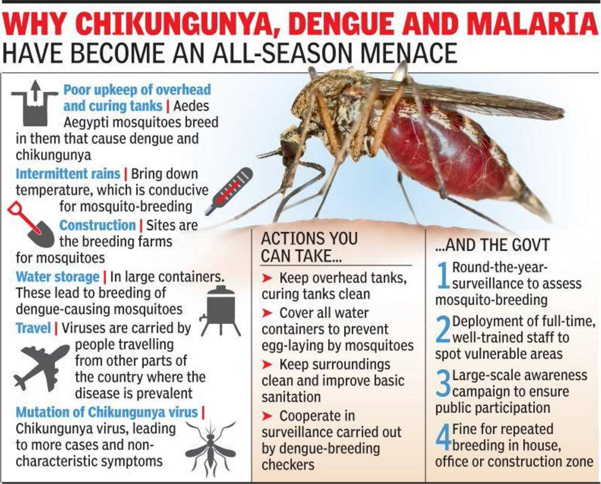 chikungunya mosquito and significant risk factor Via the bite of an infected mosquito significant urban outbreaks of chikungunya fever were and risk factors of chikungunya virus.