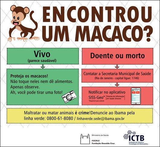 Morte de #macacos prejudica #prevenção e controle da #febreamarela em humanos #fiocruz https://t.co/foLxFsdiX6