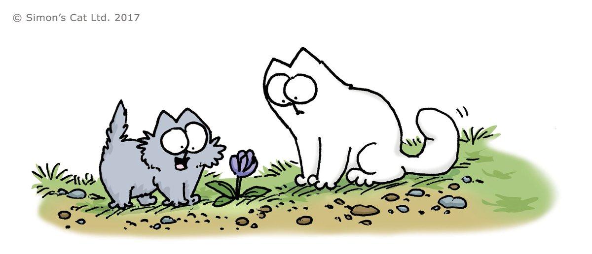 Солнышки анимашки, картинки кот саймона в цвете
