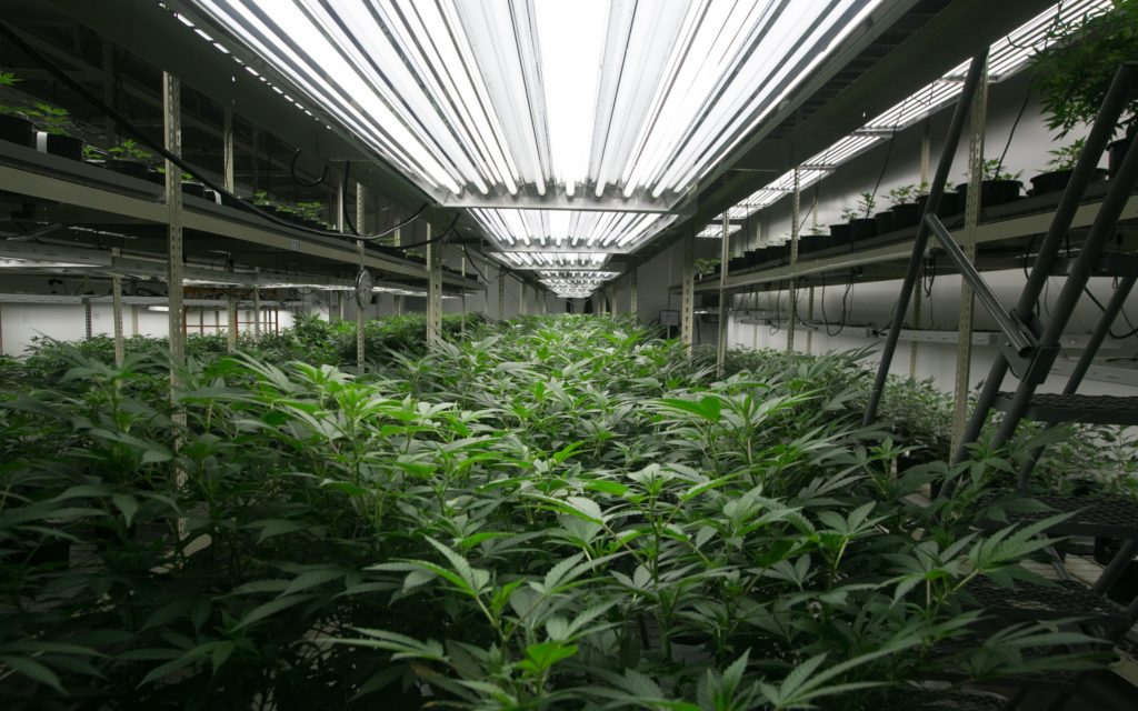 Grow Q&A: Should I Veg My Pot Plants Under 24 Hours of Light? – High Times
