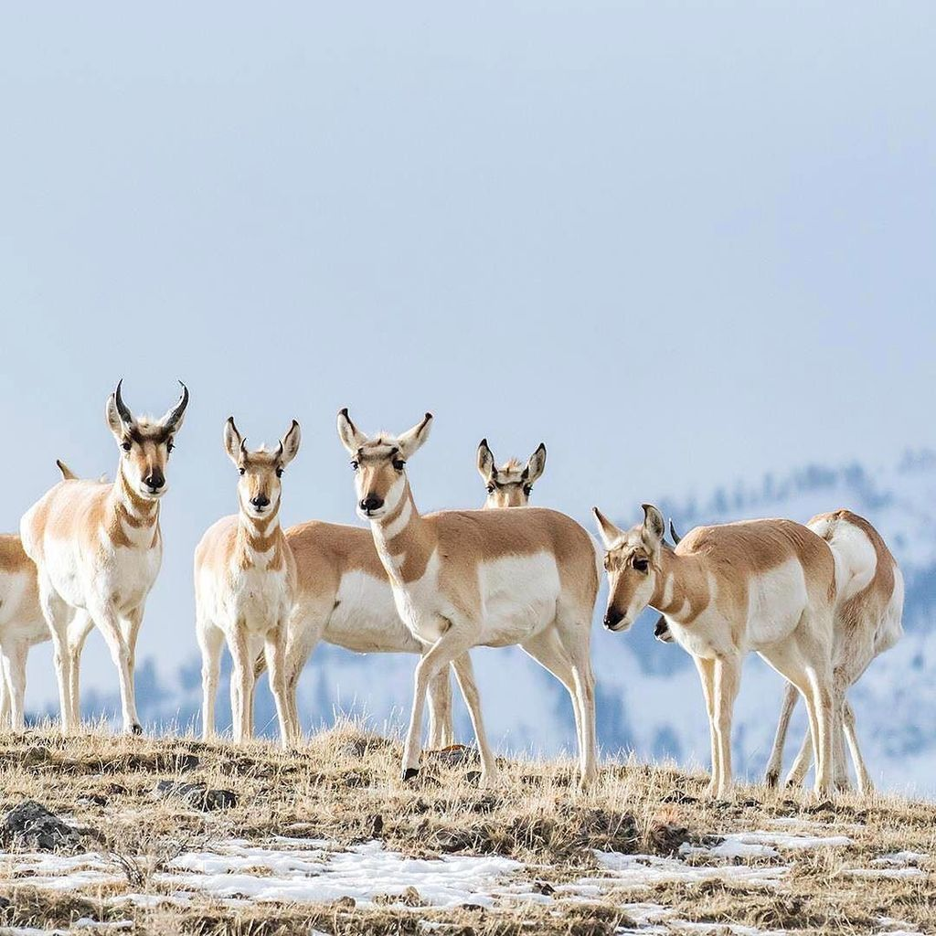 CO Parks & Wildlife (@COParksWildlife)