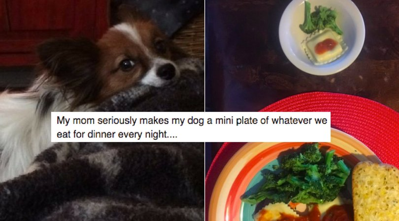Mom Makes Mini Versions Of Her Dinners For Pampered Pooch Every Night