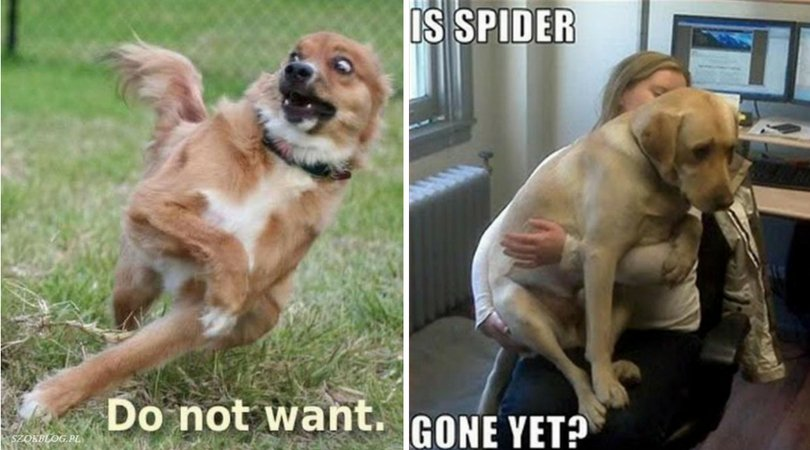 23 Animals Who Are You After Seeing A Spider