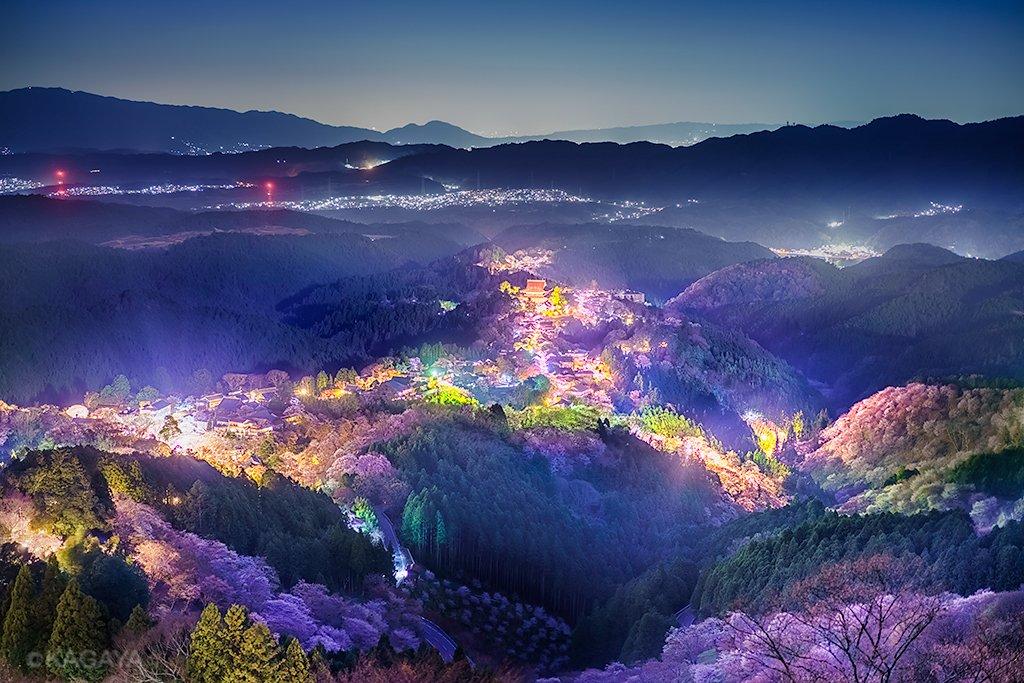 千本桜の夜。満開の桜を照らすのは町の灯と月光。カメラの長秒露光で光を集め、肉眼では見えづらい色彩までも浮かび上がりました。(昨日、奈良県吉野山にて撮影) pic.twitter.com/g4HDXNrE21