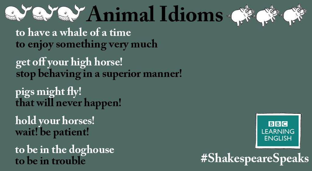 Be the bee&#39;s knees with these animal #idioms. For more phrases go here:  http:// bbc.in/2oeyKxP  &nbsp;   #Shakespeare<br>http://pic.twitter.com/8DmQdC3M7C