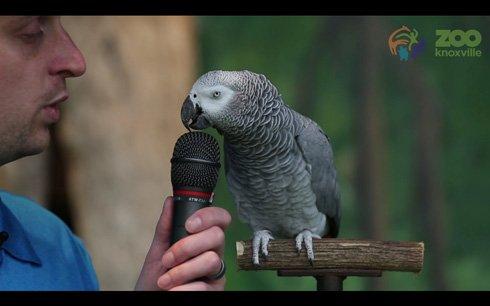 めっちゃすごい  芸人さんかな? 200種類以上の音声ものまねができるヨウムが、ひたすら芸を披露する動画 - ねとらぼ
