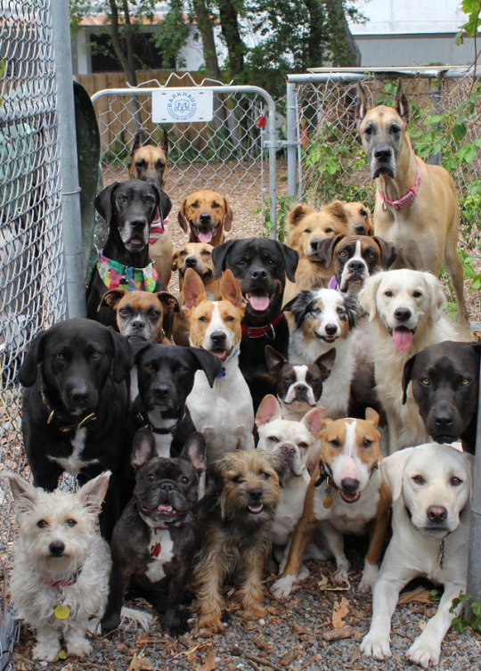 Look at this doggy daycare class photo https://t.co/hdeldYLMGk