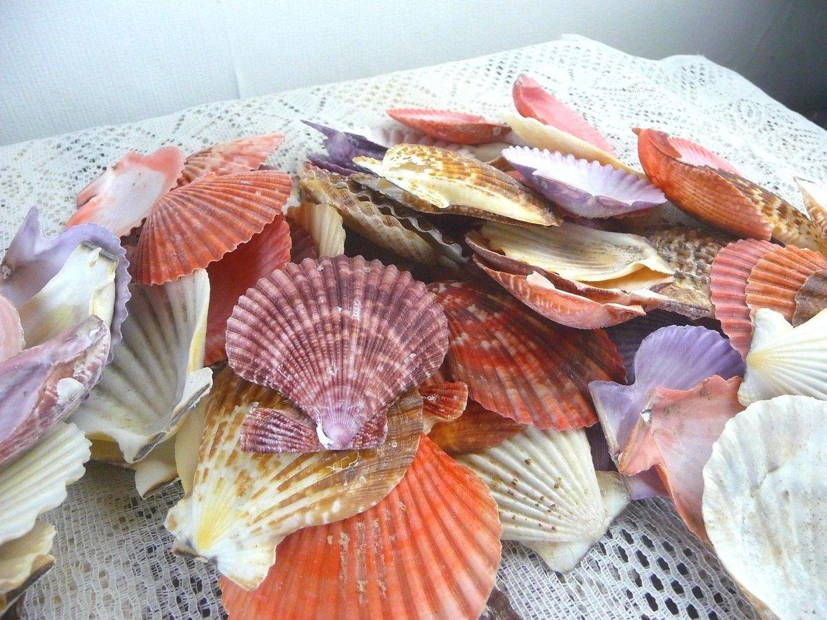 Nautical oceans nauticaloceans twitter perfect wedding decoration httpebay itm350g mixed sea shells large aquarium craft beach indian table wedding decoration 172625391396 junglespirit Gallery