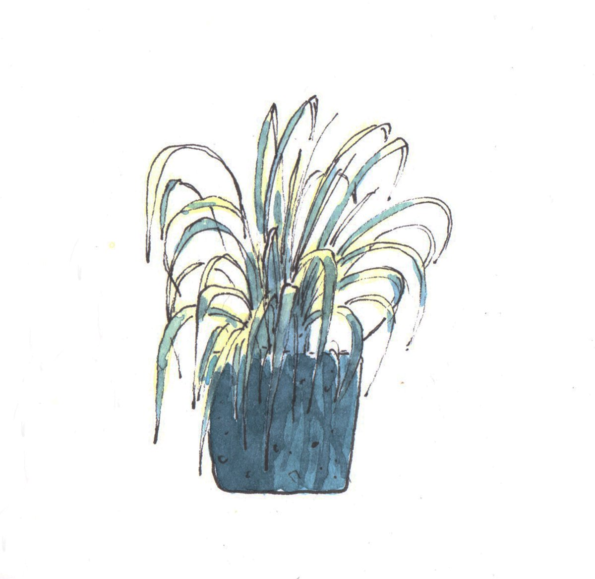 George Howlett On Twitter Spider Plant Art Painting Ink Watercolour Watercolor Conceptart Drawing
