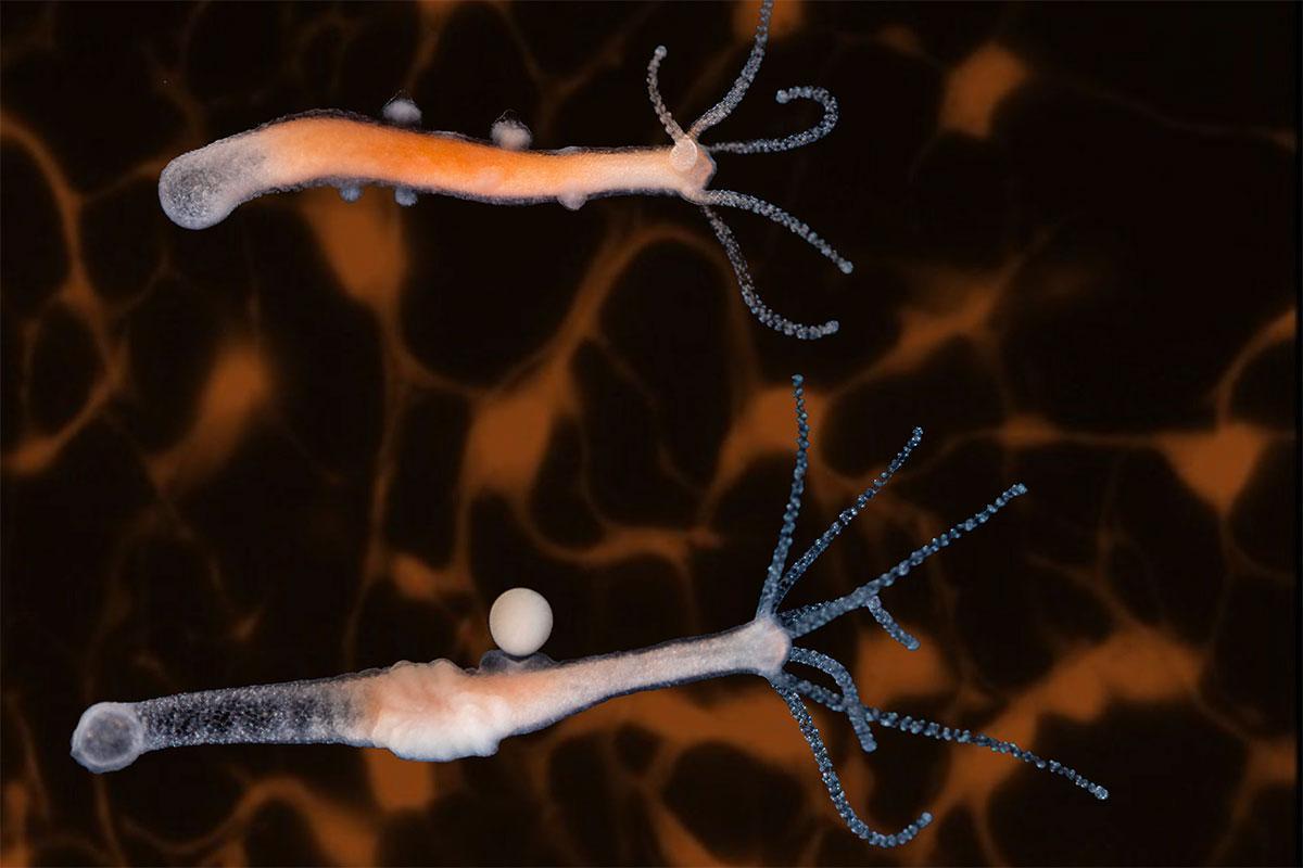 """Результат пошуку зображень за запитом """"animal nervous system"""""""