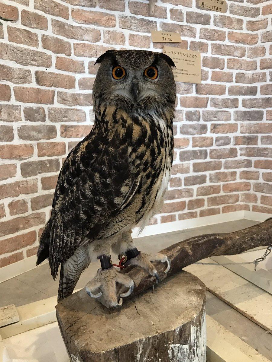 フクロウの驚異的な足の長さ