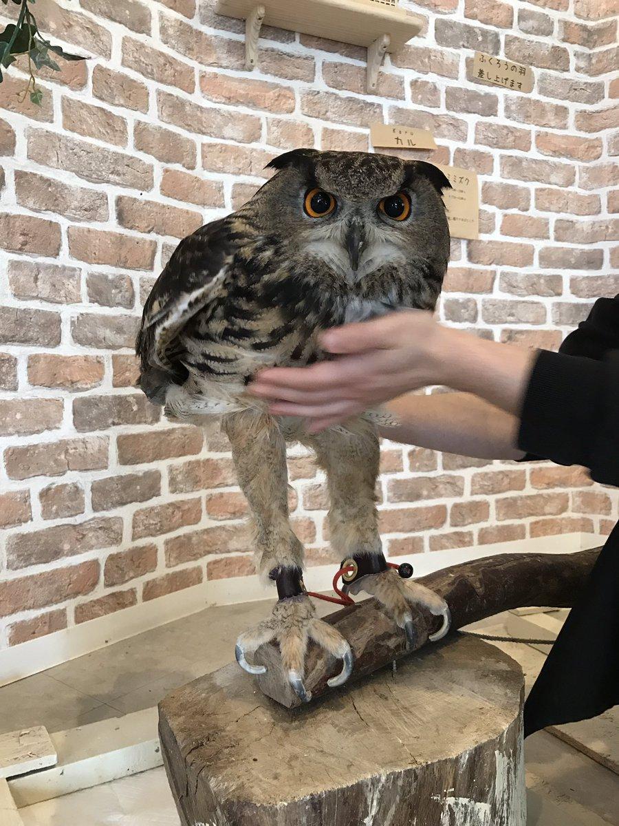 意外と長っwwフクロウの足の長さにビックリwww