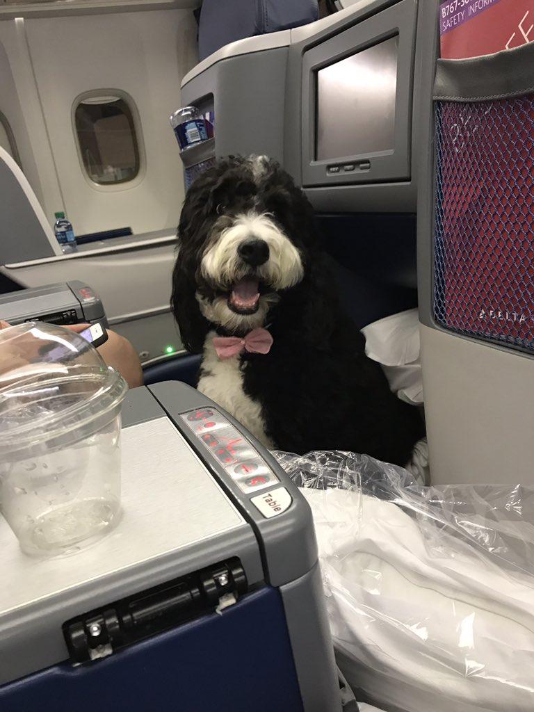 Mark Halperin Stumbles Across Joy on an Airplane and Immediately Hates It