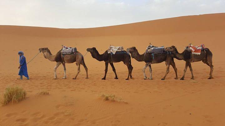 camel toe camel toe cameltoe chameaux en 2018 t. Black Bedroom Furniture Sets. Home Design Ideas