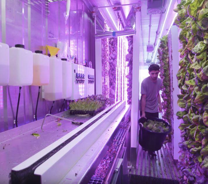 I nuovi agricoltori urbani