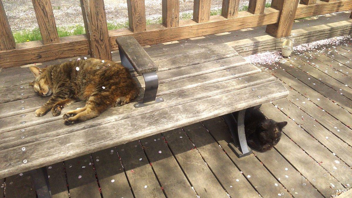 熟睡中の野良猫に桜吹雪がつもってた pic.twitter.com/TcpTed1XDG