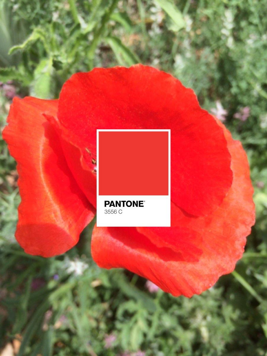 Fantone on Twitter: \