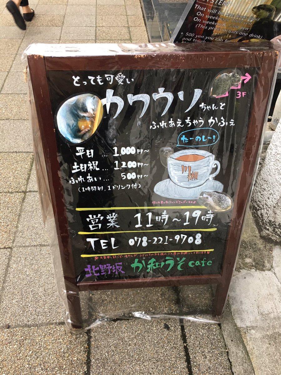 念願のカワウソカフェ来たけど、可愛すぎかな???