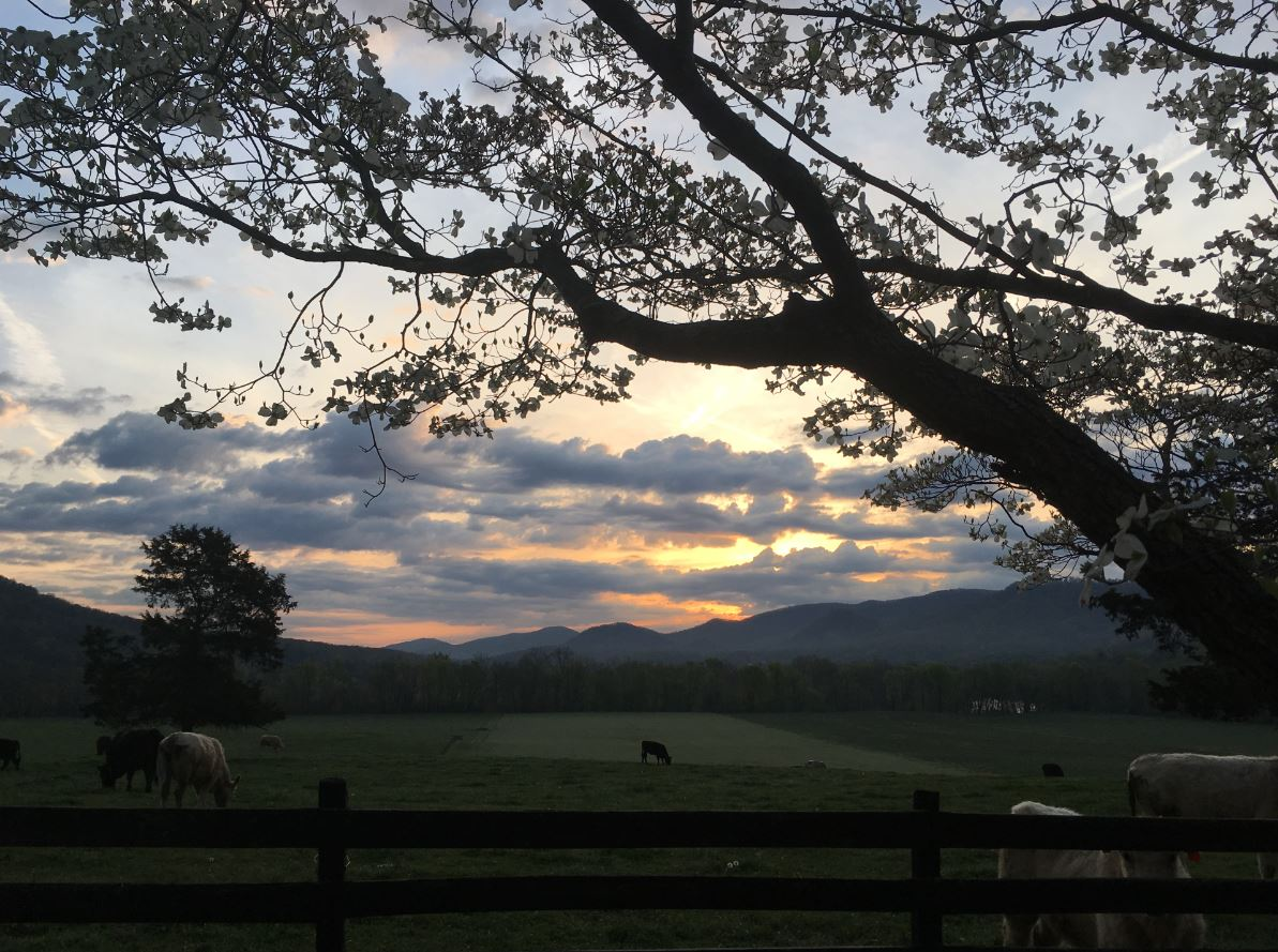 Happy Saturday morning! Thanks to Martha for sending us this beautiful #Buchanan sunrise.   Share your photos at  http:// wdbj7.com/mycapture/subm it/ &nbsp; … <br>http://pic.twitter.com/Or3IYi3CCT