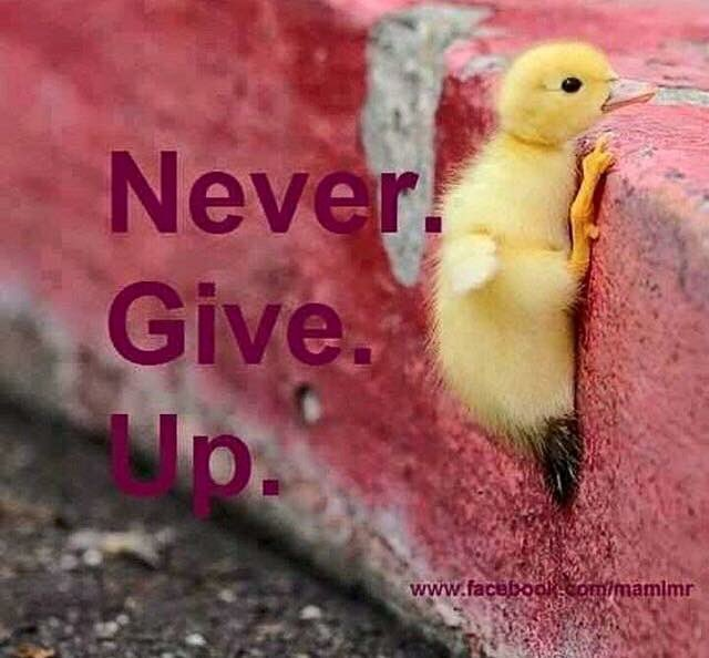 Worth repeating, love this little guy #determination #persistent <br>http://pic.twitter.com/cKlXDWUqVn