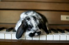 baby bun plays the piano