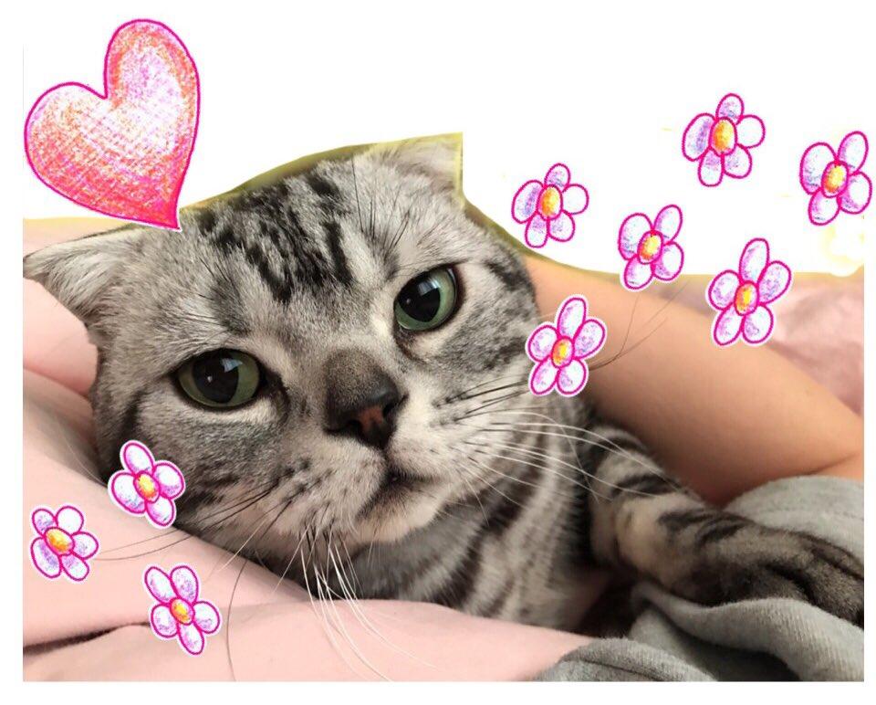 ベッドで寝てたら急に腕の中に入ってきて甘えてくる。猫あるある。おはようございます。#猫 #cat #ビス pic.twitter.com/vFkoYwszVT